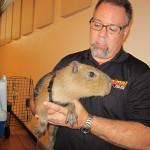 wildlife expert holds a capybara